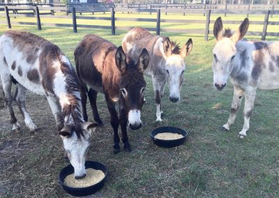 Rescue LIfe of West Palm Beach saved 6 Donkeys from Slaughter