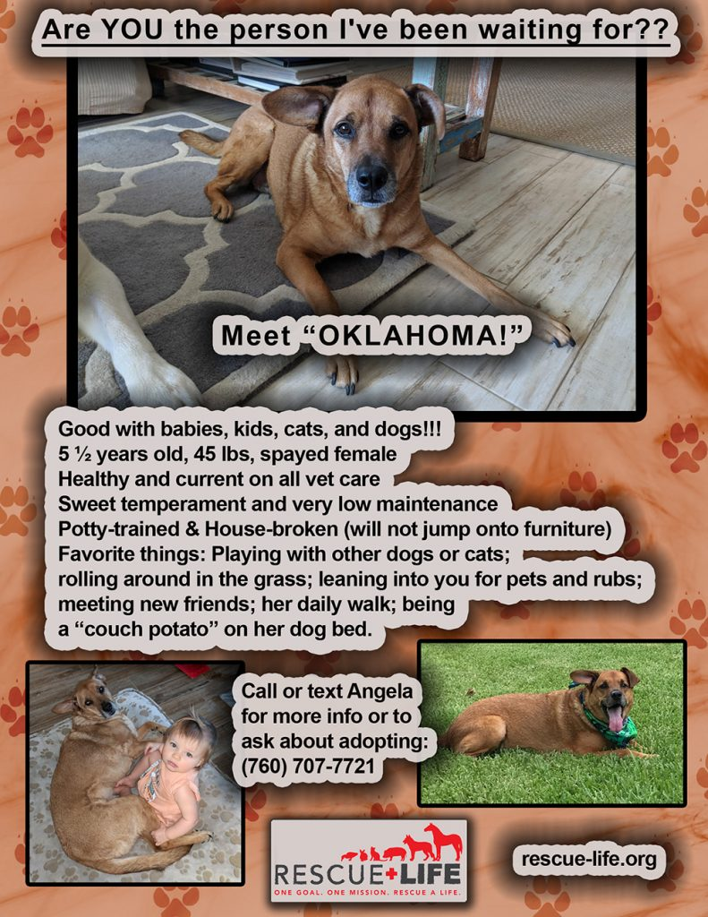 Oklahoma, Dog for adoption, Rescue Life West Palm Beach